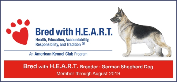 German Shepherd Breeder Mi